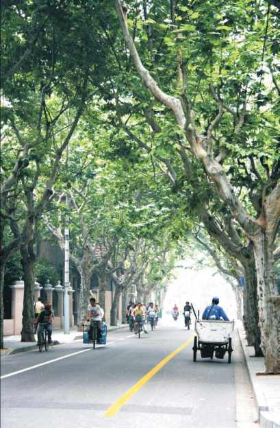 French Concession Area. 1jpg
